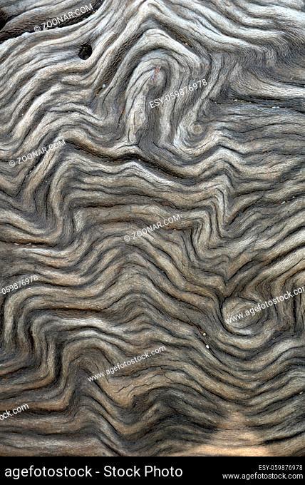 Maserung , Holz, maser, form, struktur, natur, form, baum, baumstamm, natur, grau, braun
