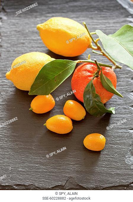 Still life with citrus fruit