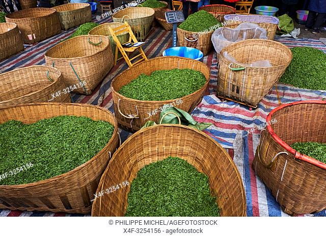 China, Sichuan province, Emei, fresh tea market, the pickers sale the leaves from the day crop