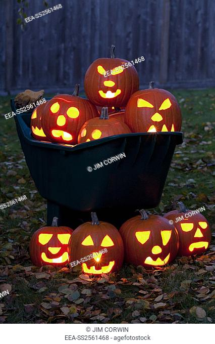 Lit Carved Pumpkins in Wheelbarrow. Lit carved pumpkins in a wheelbarrow with autumn leaves on backyard lawn at twilight
