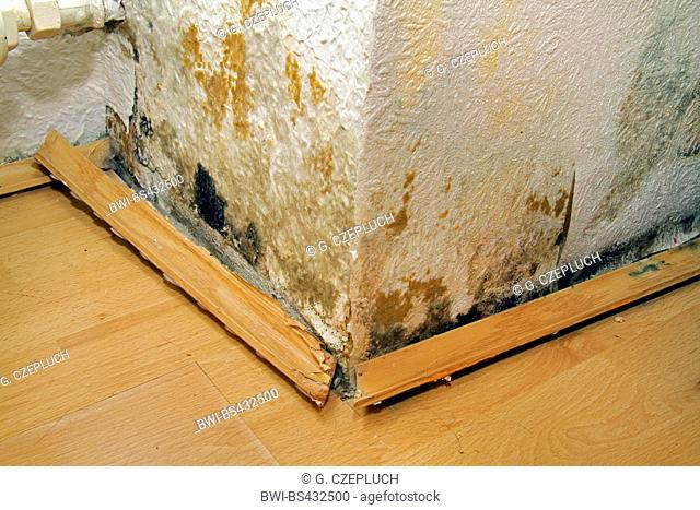 water damage in a home because of a leaky dormer, formation of mould, Germany