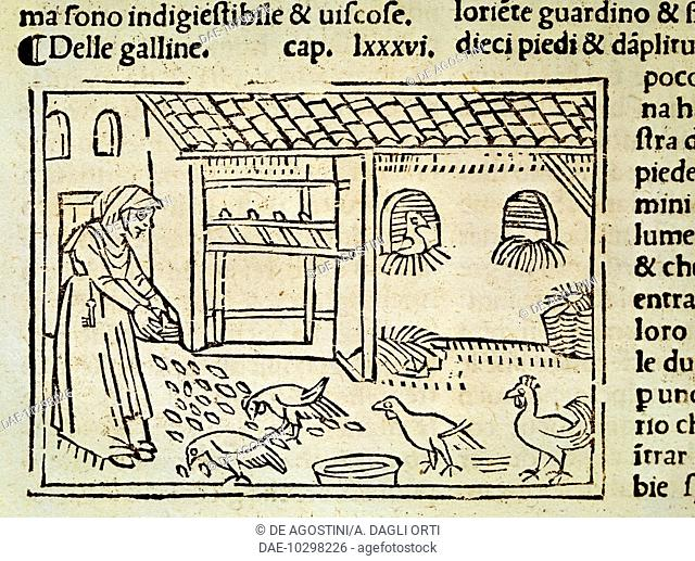 Raising chickens in the yard, illustration from De Agricoltura Vulgare, by Pier Crescenzio (1233-1320), edition published in Venice, 1495