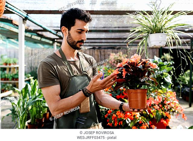 Worker in a garden center caring for a flower