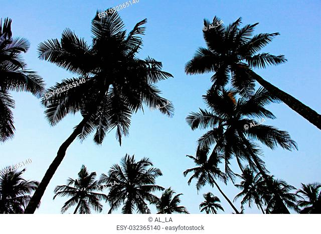 Silhouette palm trees under thw blue sky