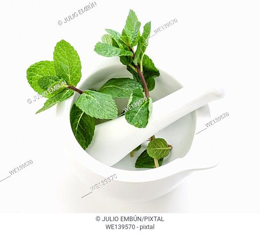 branch of fresh mint in white stone mortar