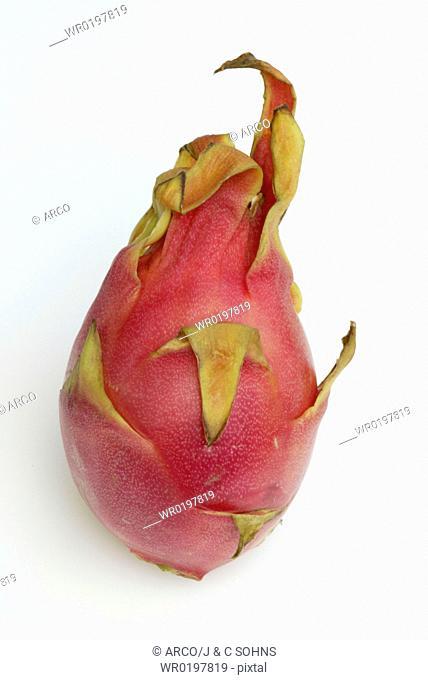 Dragonfruit,Hylocereus, triangularis