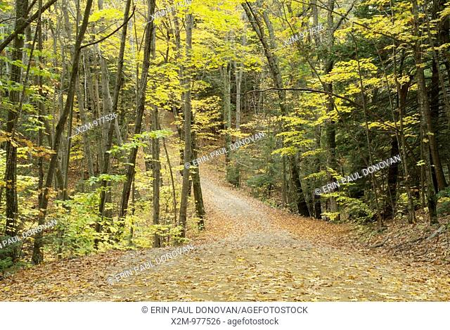 The beautiful Autumn / Fall Colors of the forest around Round Pond Trail in Pawtuckaway State Park in the state of New Hampshire, USA