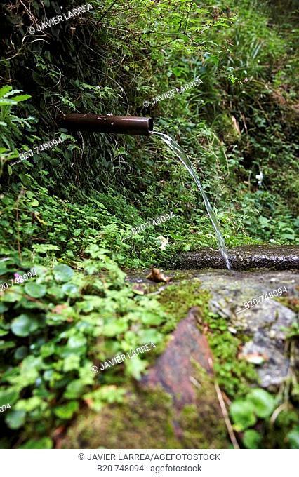 Fountain, spring, forest. Belate, Baztan, Navarra