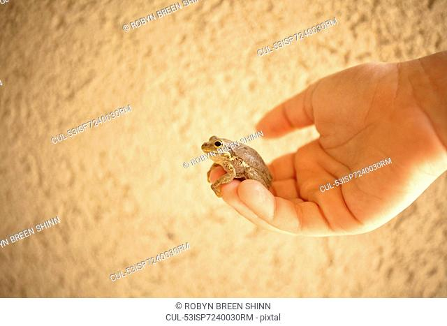 Close up of child holding small frog