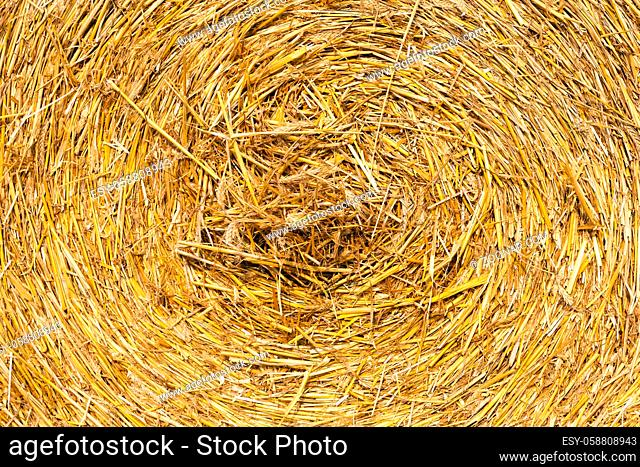 straw of yellow color folded in the stock after harvest of cereals. Photo close up