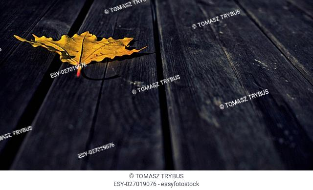 close up on yellow leaves on dark wooden background