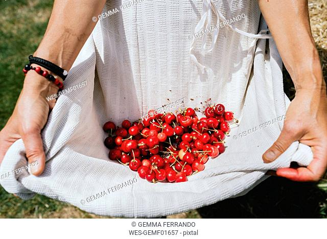 Woman holding white apron full of cherries, partial view