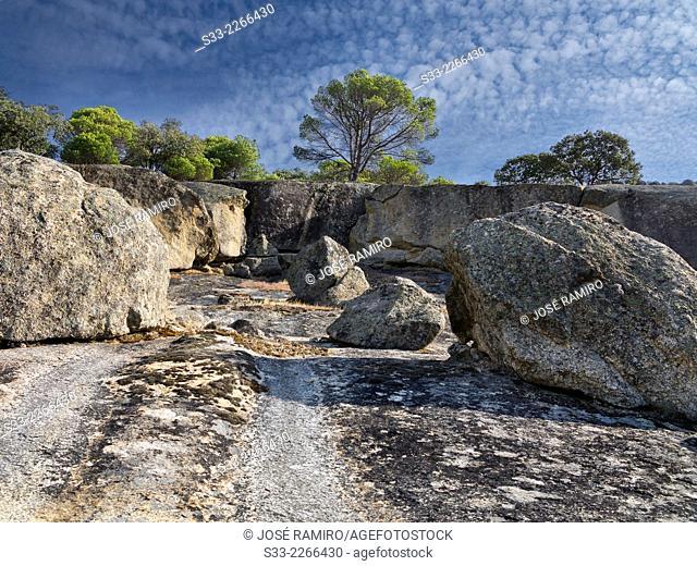 Granite and pines in Cadalso de los Vidrios. Madrid. Spain. Europe