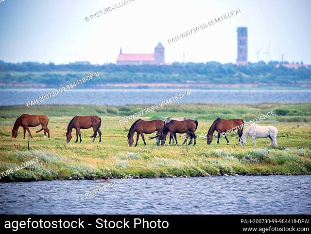 28 July 2020, Mecklenburg-Western Pomerania, Fährdorf: Horses graze on a small headland in Wismar Bay against the backdrop of the Hanseatic city