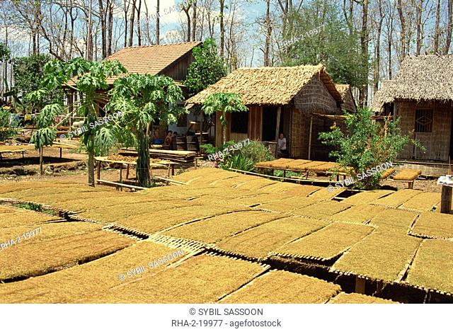 Tobacco drying outside, near Dalat, South Vietnam, Vietnam, Indochina, Southeast Asia, Asia
