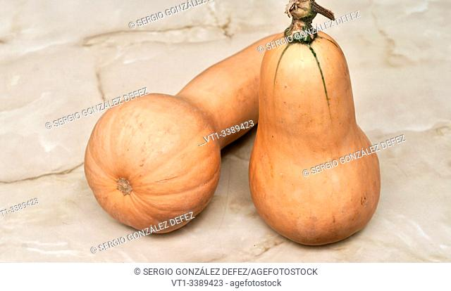 """elongated pumpkin variety """"""""Moscada de Provenza"""""""" for backgrounds and textures"""