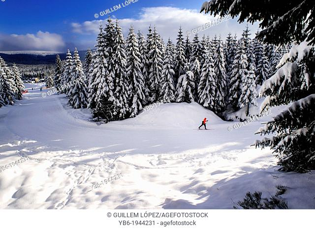 Cross-country skier in a frozen winter landscape, Jakuszyce, Poland