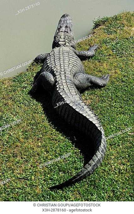 alligator, Alligator mississippiensis, by the water, Gator Country Wildlife Adventure Park, Beaumont, Texas, United States of America, North America