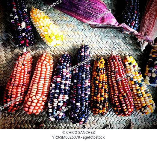 Colored corn cobs in a restaurant in Cholula, Puebla, México