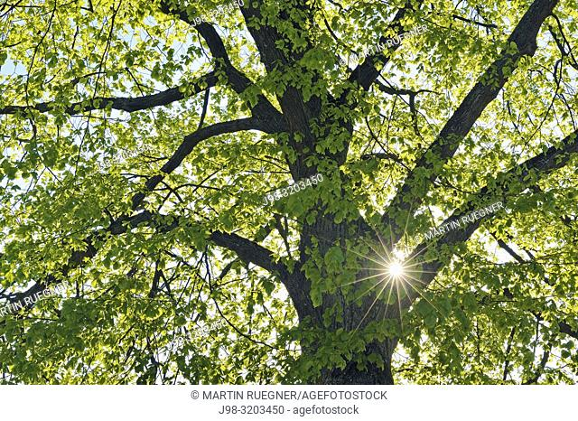 Close up of tree with sun and sunbeams in spring. Bavaria, Germany