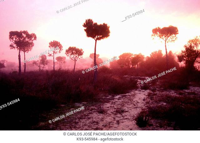 Doñana National Park. Huelva province, Spain
