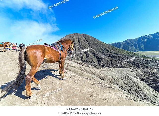 BROMO, INDONESIA - JULY 22, 2016: The horse at Mount Bromo volcano, the magnificent view of Mt. Bromo located in Bromo Tengger Semeru National Park, East Java