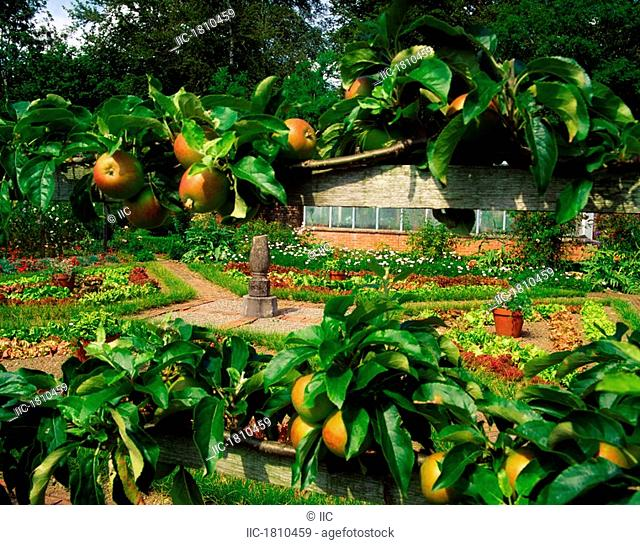 Lodge Park Walled Garden, Co Kildare, Ireland, Garden through espaliered apples