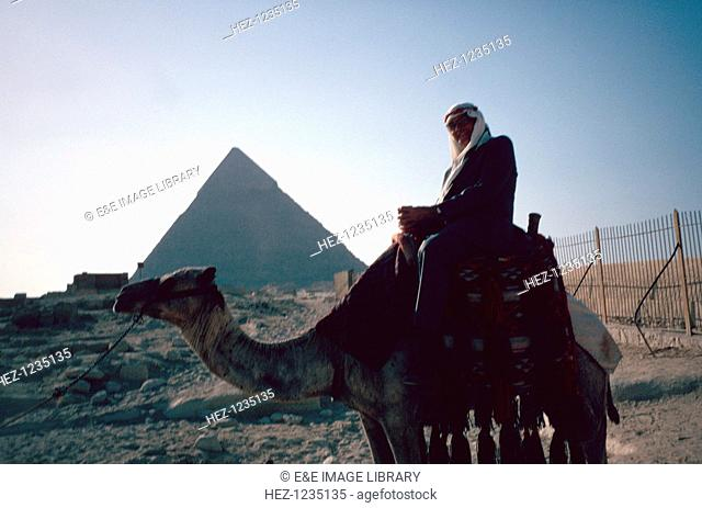 Camel and Pyramid, Giza, Egypt. The three pyramids housing the tombs of the Pharaohs Khufu (Cheops), Khafre (Chephren), and Menkaura (Men-kau-re) are sited...