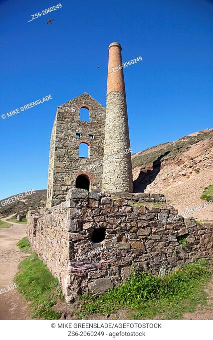 A pair of peregrine falcons soar above Towanroath Engine House, Wheal Coates, St Agnes, Cornwall, UK