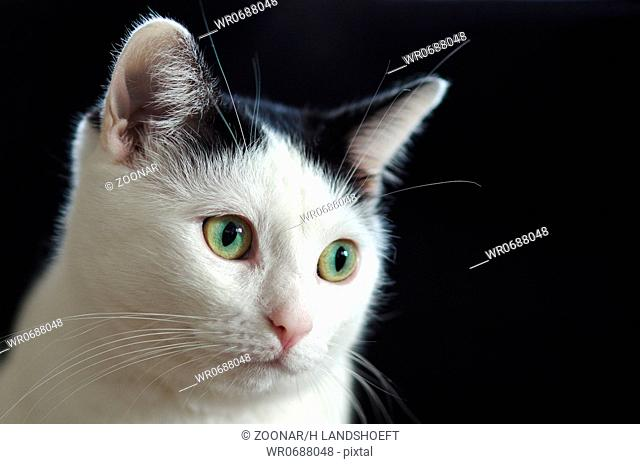 Cat with black background