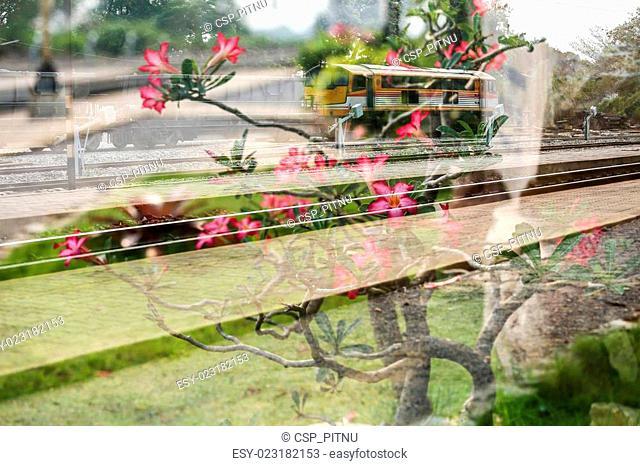 Double exposure train and Frangipani