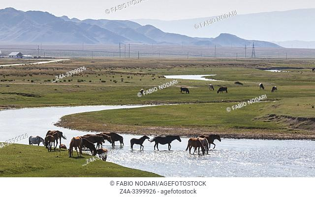 Horses crossing a river in Kazakhstan