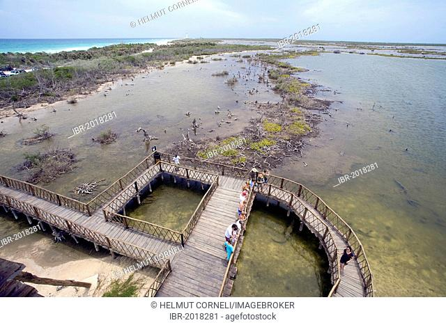 Viewing platform in the crocodiles zone, mangroves, Punta Sur, in the south of Cozumel, Mexico, Caribbean