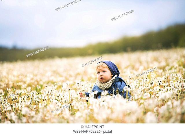 Cute little boy in meadow full of dandelions