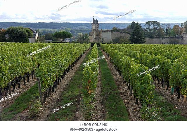 Vineyard, Chinon, Indre-et-Loire, Touraine, France, Europe