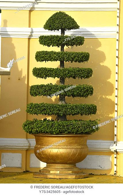 A tree at the entrance of royal palace, Phnom Penh, Cambodia, South Esat Asia
