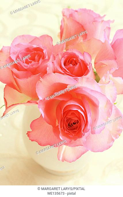 Beautiful romantic pink roses in a white vase still life