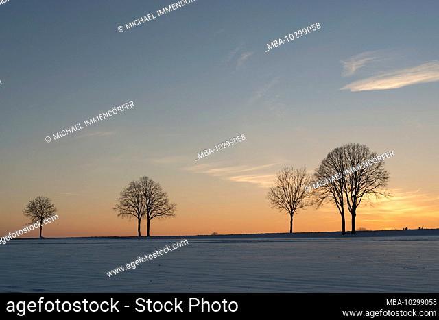 Germany, Baden-Wuerttemberg, Swabian Jura, Grabenstetten, bare trees at dusk