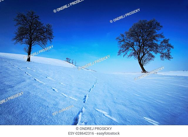 Two lone trees in winter snowy landscape with blue sky