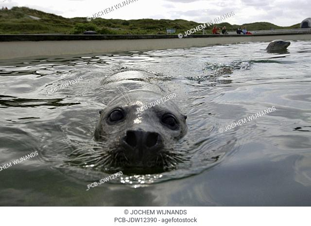 Texel, the open basin of the seal sanctuary of Ecomare