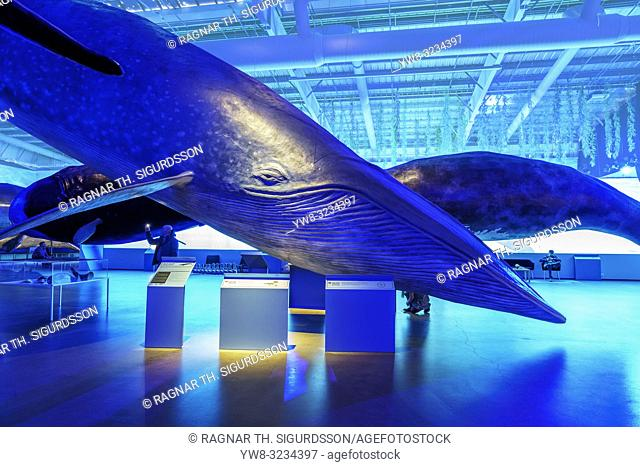 Whale Museum, Reykjavik, Iceland