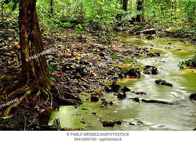 Stream landscape in Cotigao sanctuary, Goa, India
