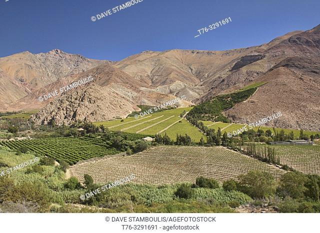 Pisco grapes growing in the beautiful Elqui Valley, Pisco Elqui, Chile