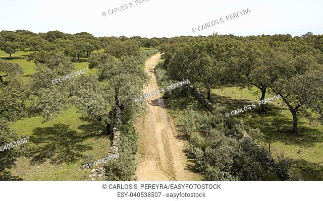 Aerial view of the dehesa in the province of Caceres in Extremadura, Spain