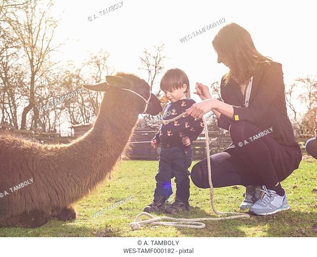 Mother and her little son with a llama on a paddock