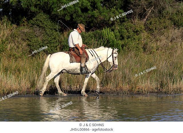 Camargue Horse,Equus caballus,Saintes Marie de la Mer,France,Europe,Camargue,Bouches du Rhone,horse and guardian
