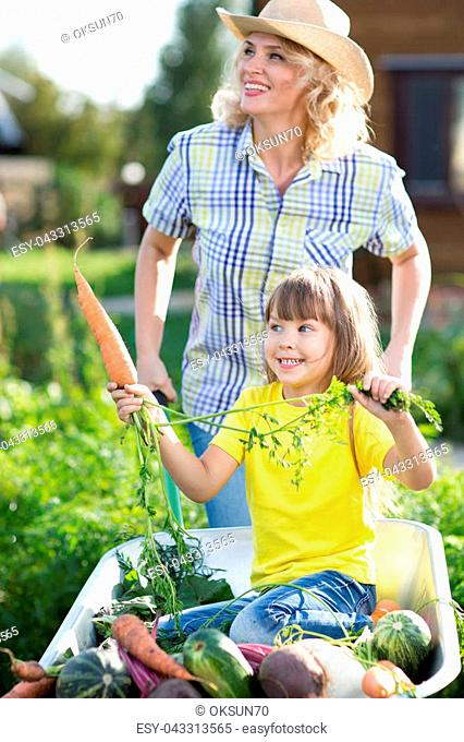 Child holds carrot in wheelbarrow with fresh vegetables in the garden. Mother is carrying her daughter in cart