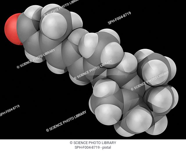 Retinal vitamin A, molecular model. One of the many forms of vitamin A. Produced by living organisms by oxidative cleavage of carotenoids