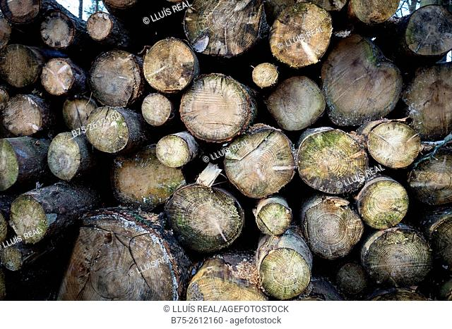 Close-up of cut tree trunks, piled in a forest. Grassington, North Yorkshire, Yorkshire Dales, England, UK, europe