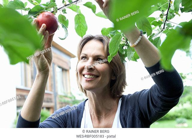Smiling woman picking apple from tree